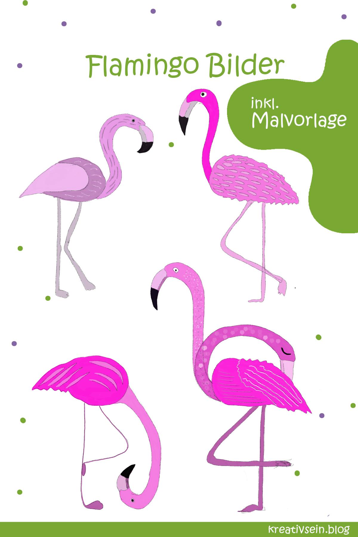 malvorlage flamingo kopf  coloring and malvorlagan
